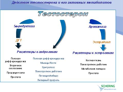 gormoni-povishayushie-virabotku-spermatozoidov