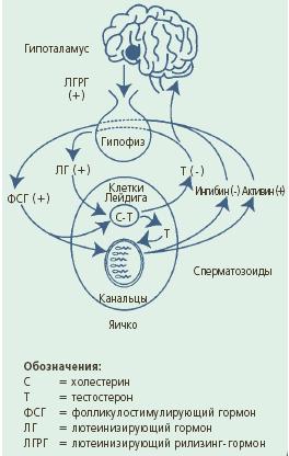 Санатории россии с лечением гипертонии
